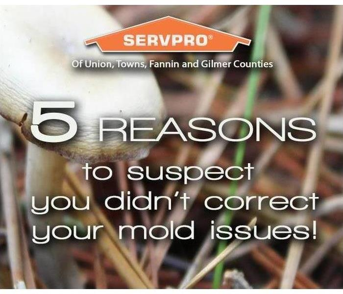 Why SERVPRO Mold from Heavy Flooding a Serious Concern